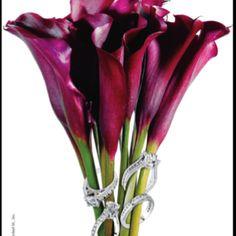 Purple cala lillies !! My favorite flowers