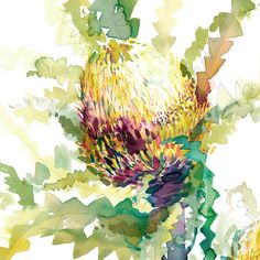 """""""The Neighbour's Neighbour Banksia"""" is a fine art limited edition print on beautiful textured paper by Natalie Martin. Botanical Drawings, Botanical Art, Botanical Illustration, Watercolor Flowers, Watercolor Art, Painting Flowers, Abstract Flower Art, Diy Canvas Art, Painting Inspiration"""