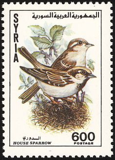 House Sparrow stamps - mainly images - gallery format