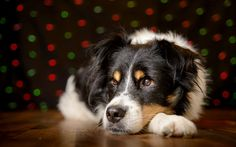 How to photograph dogs with fairy lights - The Fraim Photo How-To