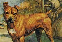Percy FitzPatrick was born in King William's Town 24 July 1862 (and died at Amanzi (Uitenhage) 24 January He was the eldest son of James Coleman Kruger National Park, National Parks, King William, Unit Studies, South Africa, Homeschool, History, Dogs, Animals