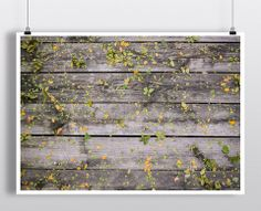 Free Photos: Green and yellow leaves on wood