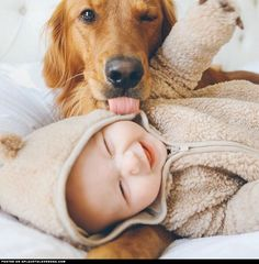 Golden Retriever Loves Baby ::: Visit our poster store Rover99.com
