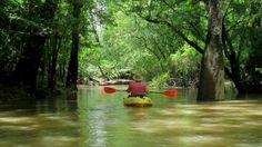 New Orleans Kayak Swamp Tours - Picture of Gravity Trails Kayak Swamp Private . Cypress and Tupelo flowage! New Orleans Swamp Tour, Pearl River, French Quarter, Kayaking, Trail, Wildlife, Tours, Explore, World