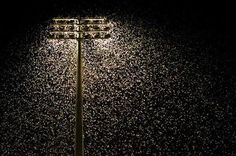 Infest or famine … the experts tell us not to assume all the moths swamping lights - in this case at Energy Australia Stadium in Newcastle at the weekend - are bogongs. Description from smh.com.au. I searched for this on bing.com/images