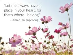 Comforting words from a dog in the afterlife... Learn more about the upcoming 21-day workshop: The Healing Pet Loss Gratitude Experience. It begins on Monday 7 November 2016. http://healingpetloss.com #petloss