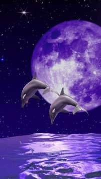 Purple Dolphins - Bing Images