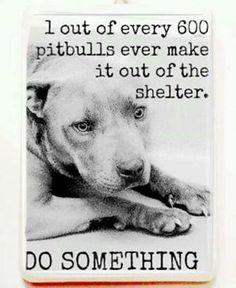 Please adopt a Pit Bull for Pit Bull's sake! #dogs #pets #PitBulls Facebook.com/sodoggonefunny