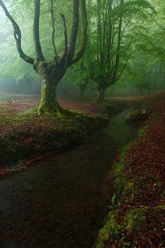 Otzarreta Forest / Bizkaia, Spain