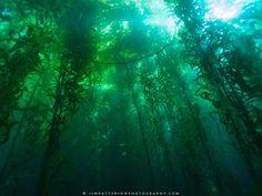 Channel-Islands-Underwater-Kelp-Forest-01-2.jpg | Jim Patterson ...