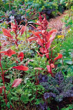 Pohoda venkovské zahrady   HOME Garden, Flowers, Plants, Garten, Lawn And Garden, Gardens, Plant, Gardening, Royal Icing Flowers
