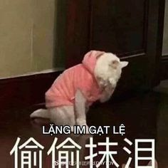:((( Kittens Cutest, Cute Cats, Chinese Meme, Funny Quotes, Funny Memes, We The Best, School Quotes, Cat Memes, Shit Happens