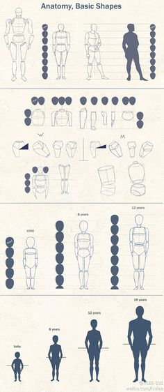 Anatomy, basic shapes 超实用人体比例