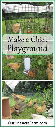 Baby chicks benefit from a time outdoors from a few days old, weather permitting. Create a stimulating, moveable playground and watch them play! Make one like my playground, or use what you have on hand to fashion something similar.