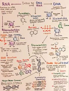 Intro to DNA and RNA Mais
