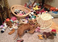 Someone's a little spoiled!!