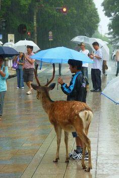A boy sharing an umbrella with a deer. ☂