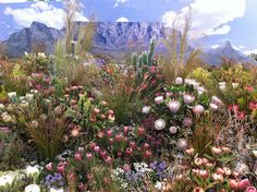 of South Africa Plants of South Africa. BelAfrique your personal travel planner - Plants of South Africa. BelAfrique your personal travel planner -