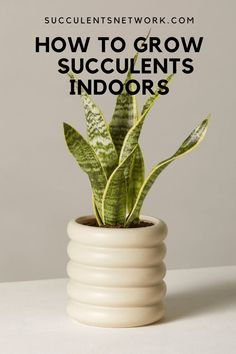 The ultimate guide to grow succulents indoors. Learn where to place for the best light and Drought Resistant Plants, Lower Lights, Desert Cactus, Succulent Care, Christmas Cactus, Interior Styling, Gardening Tips, Outdoor Gardens, Planter Pots