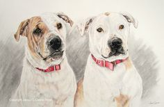 Bonnie & Nellie, Coloured Pencil Painting. Private Commission