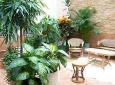 Комнатные растения в интерьере дома