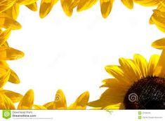 Image result for single sunflower border