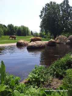 NC Zoo in Asheboro, #NC