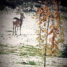 """48 Me gusta, 3 comentarios - joan_marthe_♡ (@joan_marthe_) en Instagram: """"#lillehammer #norge #norway #naturephoto #naturelover #instaphoto #myphoto #mygarden #animal…"""""""