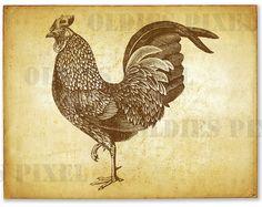 Line Art Rooster : Antique rooster & hen line art illustration hand drawing digi image