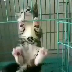 Holding on for dear life 😂😂😂😂😂 - Katzen - Adorable Animals Cute Baby Cats, Cute Cats And Kittens, Cute Funny Animals, Cute Baby Animals, Kittens Cutest, Animals And Pets, Funny Cats, Strange Animals, Cute Animal Videos