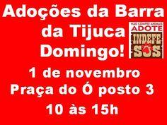 BONDE DA BARDOT: RJ: Adoção de cães e gatos na Barra da Tijuca, neste domingo (01/11)