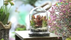 geometric  terrariums Terrarium Containers, Terrarium Ideas, Planter Ideas, Glass Terrarium, Terrariums, Small Potted Plants, Air Plants, Ceramic Planters, Floating Frame