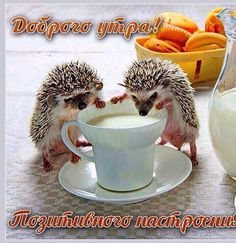 Hedgehogs sharing a cup of milk. Cute Little Animals, Cute Funny Animals, Cute Hedgehog, Tier Fotos, Cute Animal Pictures, Cute Creatures, My Animal, Animal Memes, Belle Photo