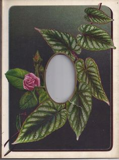 Lovely Chromolithograph Page From Victorian Photo Album