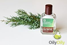 Tea Tree Oil for Fleas Removal: the Fastest Way to Get Rid of Them