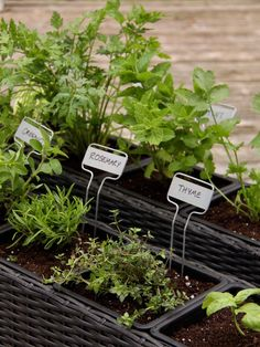 Detailed, easy-to-follow tutorial for planting an Organic Herb Container Garden - all the supplies and steps you'll need | Home for the Harvest