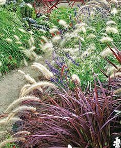 Die 97 Besten Bilder Von Graser Bambus Schachtelhalm Landscaping