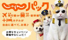 Travel guide mascot cats