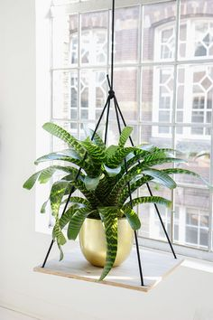 Hangen 3.0 #planten #mooiwatplantendoen via From Ezter with Love