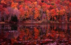 How can God create colors like that? So beautiful it makes my eyes weep. Feast on New England's fall foliage - Lonely Planet