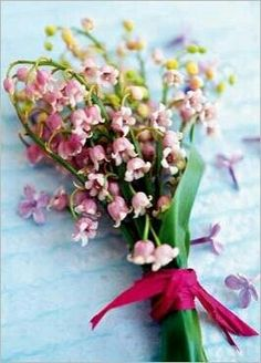 Pink Lily of the valley