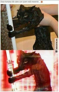 The Force Is Strong In This Cat funny cat lol humor funny pictures funny cats funny photos funny images funny animal pictures hilarious pictures Stupid Funny Memes, Funny Animal Memes, Cute Funny Animals, Funny Animal Pictures, Best Funny Pictures, Funny Photos, Funny Cats, Silly Jokes, Random Pictures