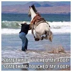 funny horse memes humor - funny horse memes ` funny horse memes hilarious ` funny horse memes equestrian ` funny horse memes videos ` funny horse memes humor ` funny horse memes so true ` funny horse memes western ` funny horse memes jokes Funny Horse Memes, Funny Horse Pictures, Funny Horses, Funny Animal Memes, Cute Funny Animals, Funny Relatable Memes, Funny Photos, Hilarious Pictures, Videos Funny