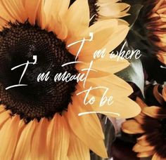 Right where I'm supposed to be/moving forward/ blessed, Sunflower Quotes, Sunflower Pictures, Sunflower Tattoos, Sunflower Iphone Wallpaper, Pretty Wallpapers, Quote Aesthetic, Wallpaper Quotes, Wallpaper Bible, Wise Words