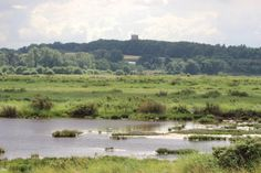 Cley Marshes - Norfolk Wildlife Trust