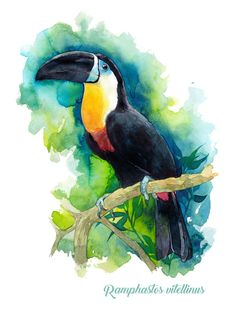 Are You Presently Finding Watercolor Arts Inspirations ? Come Visit Our Web Site And Then See Our Personal Watercolor Art Album. Watercolor Artwork, Watercolor Bird, Watercolor Animals, Watercolor Illustration, Watercolor Artists, Art Du Croquis, Inspiration Art, Bird Drawings, Animal Paintings