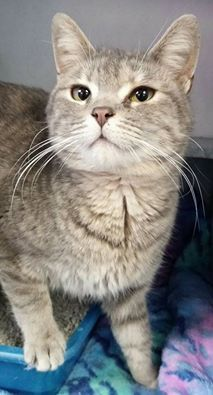 ADOPTED! Name is Jackie Female-spayed Young Friendly girl, loves attention!   Located at 2396 W Genesee Street, Lapeer, Mi.  For more information please call 810-667-0236.  https://www.facebook.com/267166810020812/photos/pb.267166810020812.-2207520000.1424404982./793441104060044/?type=3&theater