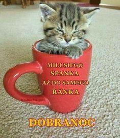 Nie wiem o co kaman Baby Kittens, Cute Cats And Kittens, Good Night, Good Morning, Kitten Gif, Pretty Cats, Hilarious, Funny, Man Humor