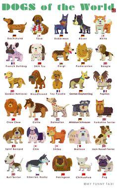 犬のイラスト (世界の犬)