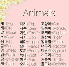 Animals in Korean